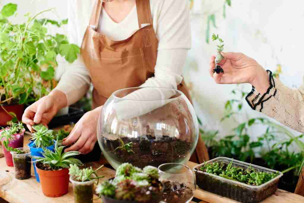 How Often Should You Be Watering Your Terrarium