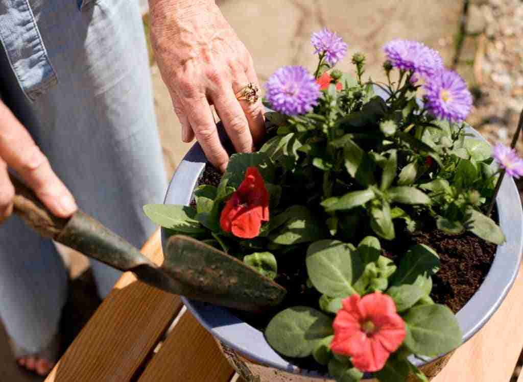 How To Get Rid Of Worms In Potted Plants