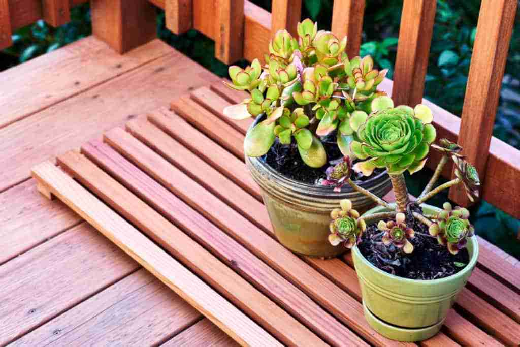 How To Water Succulents Without Drainage
