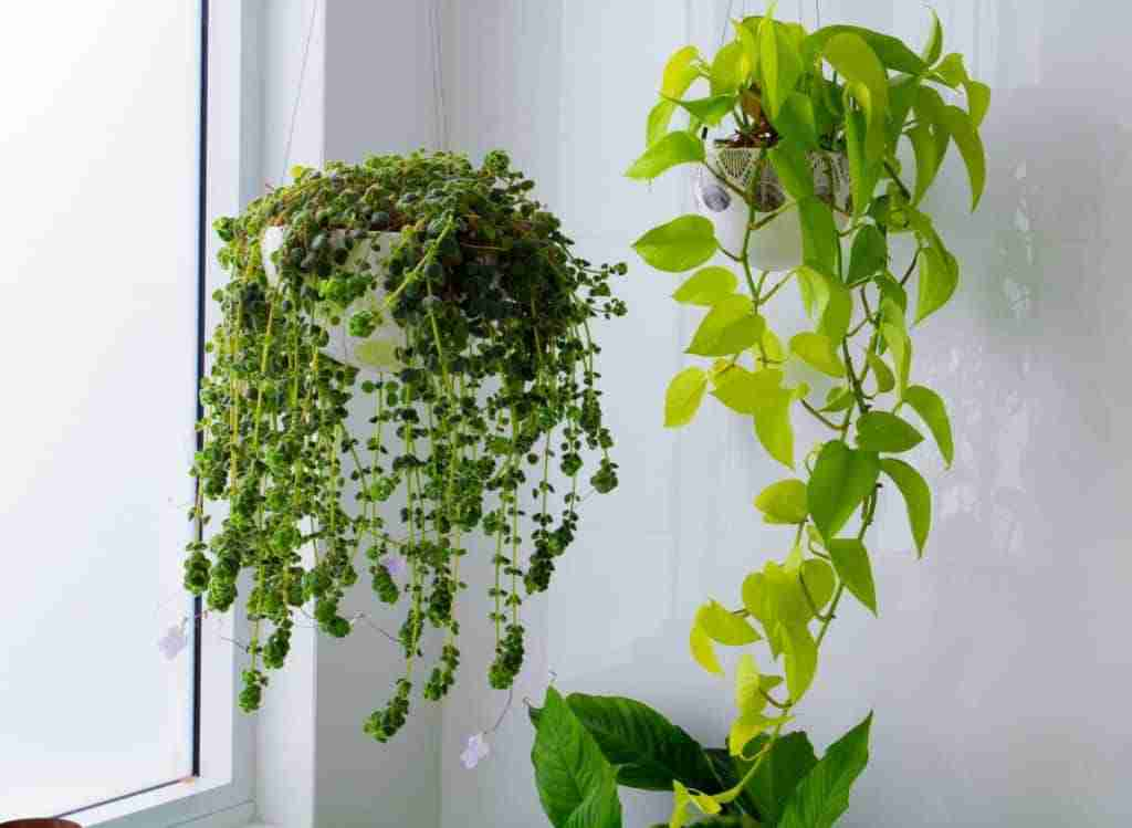 A Quick Guide to Indoor Plant Support Ideas - plantsheaven.com