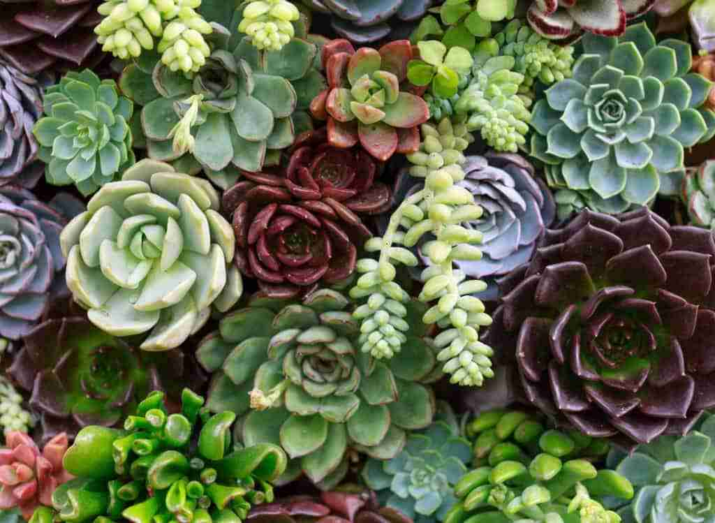 Succulents with Long Stems