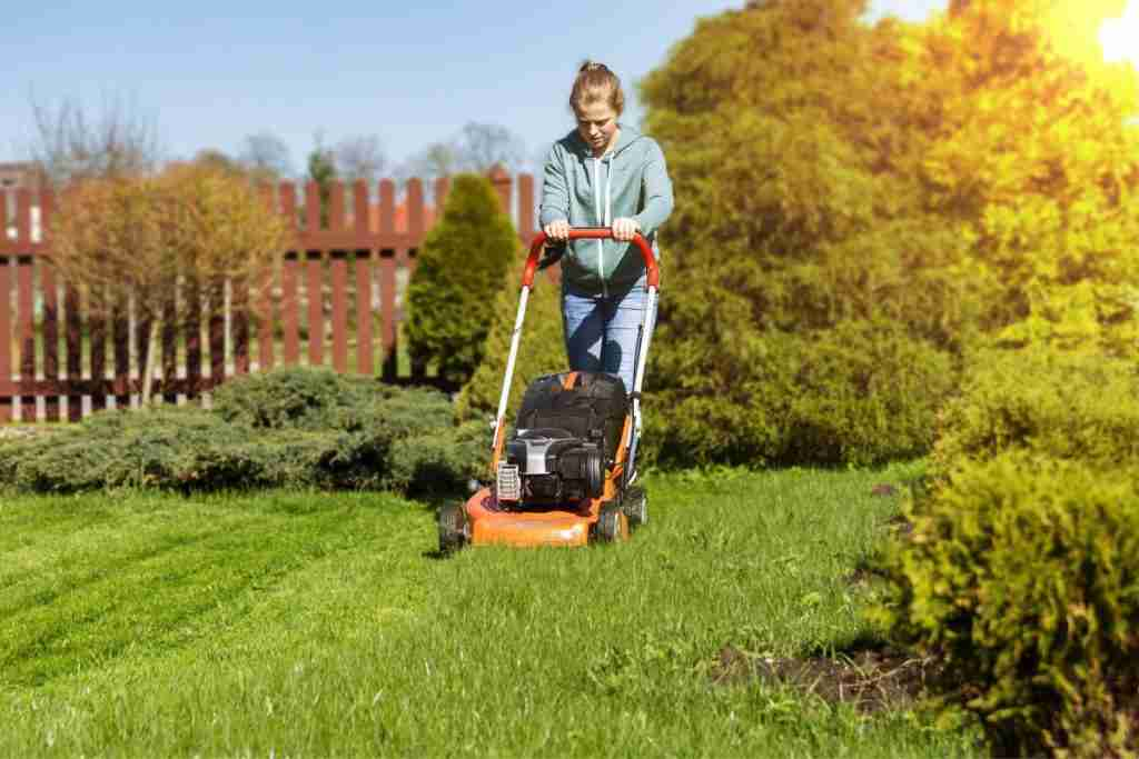 How To Get Rid Of Petty Spurge